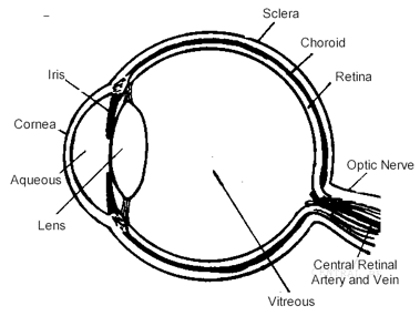 Eye diagram eye doctors lasic surgery chapel hill durham nc eye diagram ccuart Image collections